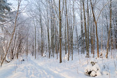 Footpath in a snowy forest Royalty Free Stock Images