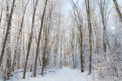 Footpath in a snowy forest Stock Photos