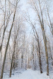 Footpath in a snowy forest Stock Image