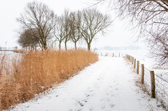 Footpath in a snowy landscape Stock Image