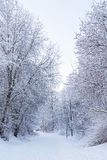 Footpath and snowy trees Royalty Free Stock Photography