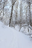 Footpath in a snowy winter forest Royalty Free Stock Photo