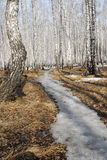 Footpath in spring forest Royalty Free Stock Images