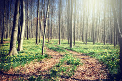 Footpath in spring forest Royalty Free Stock Photo