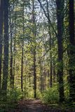 Footpath in spring forest. On sunny day Royalty Free Stock Photography