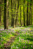 Footpath through the spring forest full of blooming flowers Stock Photography