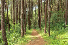 Footpath in spring forest Stock Photography