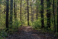 Footpath in spring forest. On sunny day Stock Photos