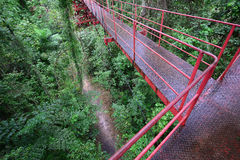 Footpath in spring forest. Top view of footpath in the forest from rope bridge, Thiland Stock Photos