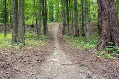 Footpath through spring green forest Stock Image