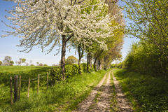 Footpath at springtime. In rural countryside stock images