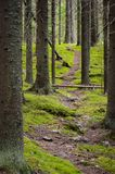 Footpath in spruce forest. Finland Royalty Free Stock Photography