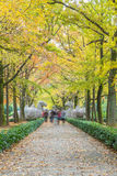 Footpath By Statues At Ming Xiaoling Mausoleum in China Stock Photo