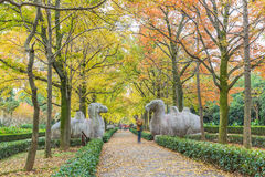 Footpath By Statues At Ming Xiaoling Mausoleum in China Royalty Free Stock Photo