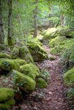 Footpath between stones in the old forest Royalty Free Stock Photos