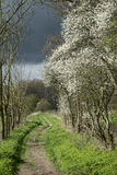 Footpath in stormy weather in Spring English countryside landscape. Footpath with blackthorn trees in stormy weather in Spring English countryside landscape royalty free stock photo