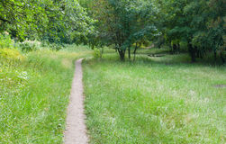Footpath in a summer deciduous forest Stock Photo