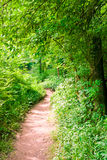 Footpath in summer green forest. At sunny day Stock Photography