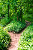 Footpath in summer green forest. At sunny day Royalty Free Stock Photo