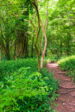 Footpath in summer green forest. At sunny day Stock Images