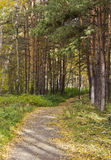 The footpath in summer the Park between pine trees and birches Stock Photos