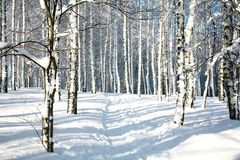 Footpath in sunny winter forest Stock Photography
