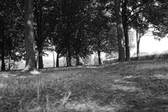 Footpath. Surrounded by trees in black and white Stock Photos