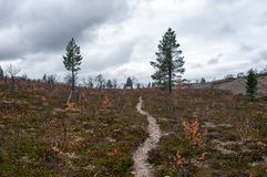 Footpath in Taiga, Finland Stock Photos
