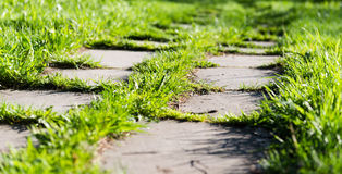 Footpath on th green grass Royalty Free Stock Photo
