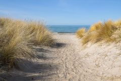 Footpath to the beach through the sand dunes with marram grass Royalty Free Stock Photography