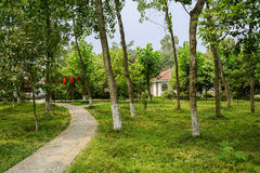 Footpath to buildings in woods on sunny summer Stock Photography