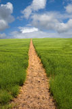 Footpath to the Horizon. Long golden yellow footpath leads across green fields and up a hill to the distant horizon under a blue cloudy sky stock photos
