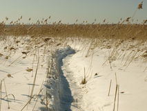 Footpath to lake. Fishermen foothpats to the frozen lake in Latvia, near Riga Royalty Free Stock Image