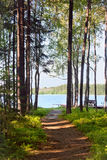 Footpath to lake through forest Royalty Free Stock Images