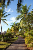 Footpath to the sea among tropical vegetation. Royalty Free Stock Photo