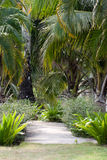 Footpath to among tropical vegetation Royalty Free Stock Photography