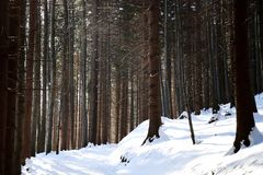 A footpath on the top of hill and forest. Covered with snow and mild snow from trees Stock Images
