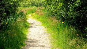 Footpath. Trail through the nature of the Island Stock Photography
