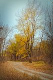 Footpath and tree in the wood in the autumn afternoon. Landscape. Blackout at the edges. Vertical format. Outdoors. Low contrast. Color. Photo stock image