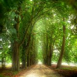 Footpath among trees. Footpath flanked by several trees royalty free stock image