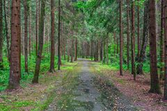 Footpath among the trees in the forest. View of the footpath among the trees in the forest Stock Photo