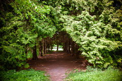 Footpath between trees Royalty Free Stock Photography