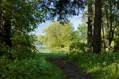 The footpath between the trees leading to the lake Royalty Free Stock Images