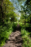 Footpath through trees Royalty Free Stock Images