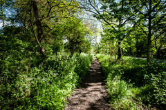 Footpath through trees Royalty Free Stock Image