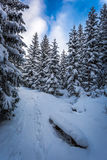 Footpath between the trees in winter Stock Photography