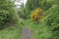 Footpath in Treeton Rotherham. Generic vegitation on Treeton footpath featuring Broom Tree Royalty Free Stock Photos