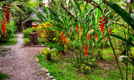 Footpath in tropical garden royalty free stock photography