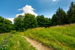 Footpath trough the glade in forest. Lovely summer nature scenery royalty free stock photos