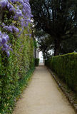 Footpath trough hedge Royalty Free Stock Photo
